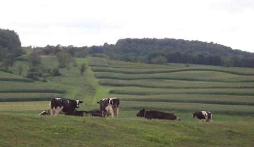cowsterrfarm