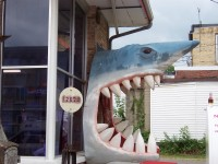 Shark in Darlington along Highway 23