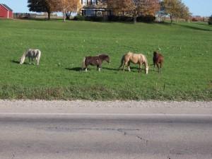 horsesalong49_800