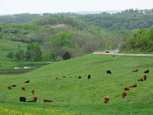 """Greening up"" across Wisconsin includes this scene along Highway 56 in Vernon County."