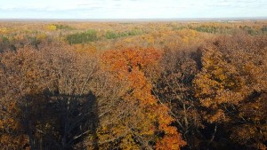 ogema_timmshill_towerview21