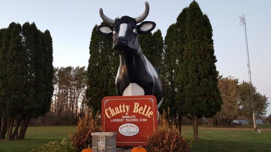 Chatty Belle, the World's Largest Talking Cow