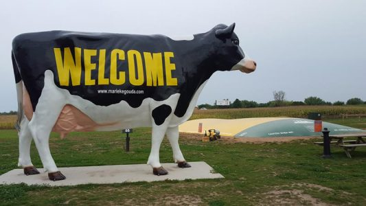 Marieke Gouda cow entrance
