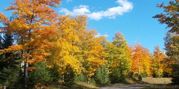Colorama Weekend with fall colors in Land O'Lakes