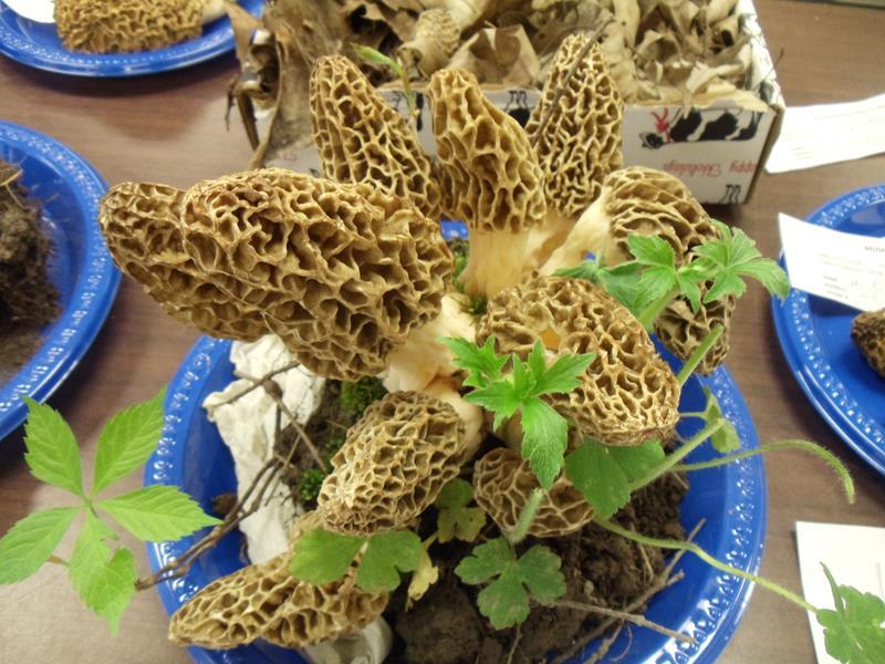 Wisconsin Weekend: Morel Mushroom Festival, Muscoda