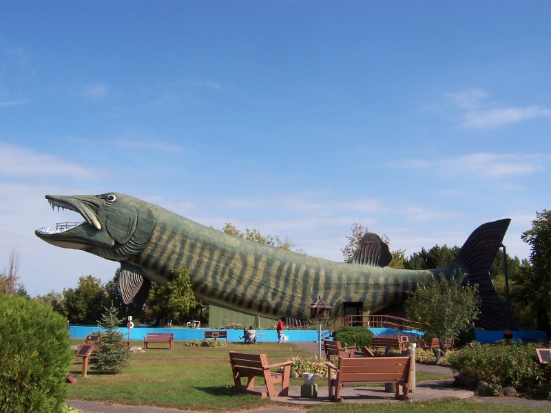 World's Largest Muskie in Hayward, along US Highway 63