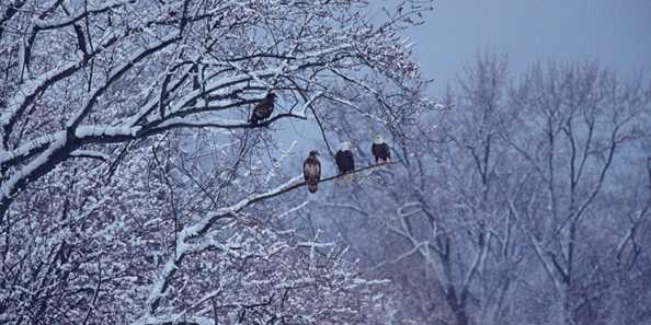 Wisconsin Weekend: Bald Eagle Watching Days