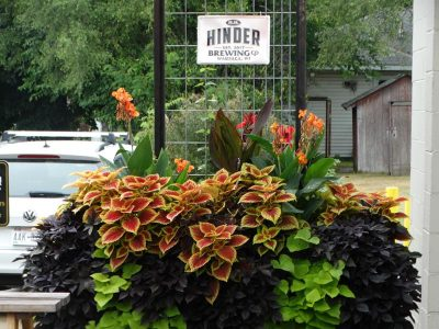 Plants in bloom on the patio at Hinder Brewing Company, Waupaca, Wisconsin