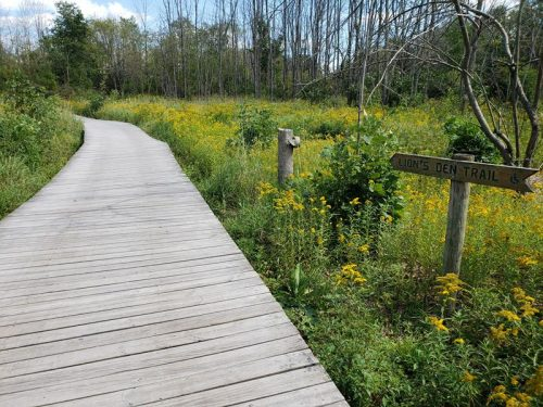 Boardwalk along the Lion's Den Trail at Lion's Den Gorge Nature Preserve, Grafton, Wisconsin
