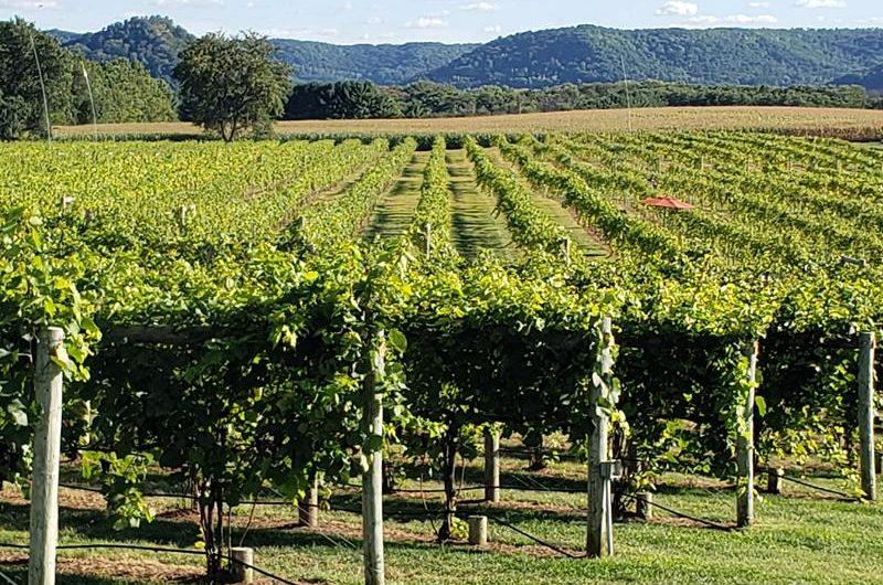 Elmaro Vineyard & Winery